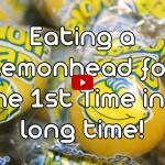 Eating a Lemonhead Candy for the First Time in a Long Time E02